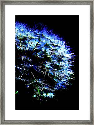 Midnight Glow Framed Print by Julie Lueders