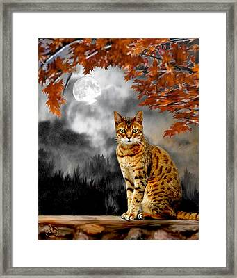 Midnight Tom 1 Framed Print by Ron Chambers