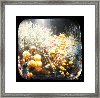 Midsummer Framed Print by Andrew Paranavitana