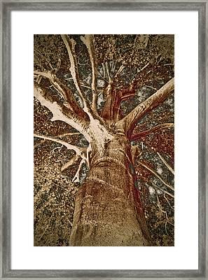 Mighty Tree Framed Print by Frank Tschakert