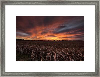 Milo Harvest Sunset Framed Print by Chris Harris