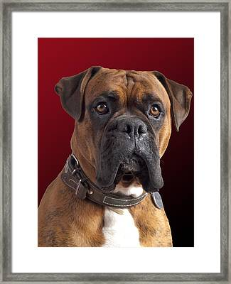 Milo Framed Print by Kenton Smith