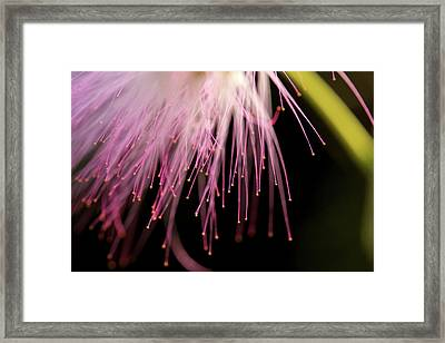 Mimosa 3 Framed Print by Mike Eingle