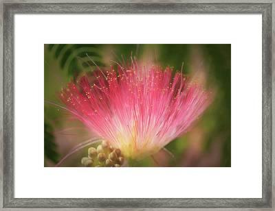 Mimosa Silk Optics Framed Print by Donna Kennedy