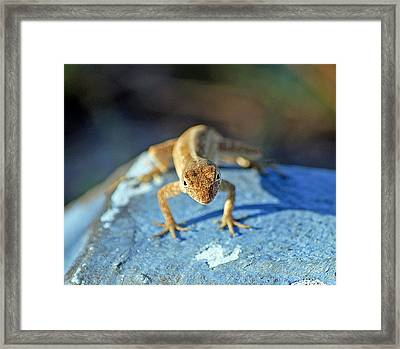 Mini Attitude Framed Print by Kenneth Albin