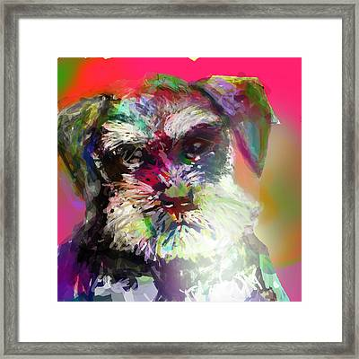 Miniature Schnauzer Framed Print by James Thomas
