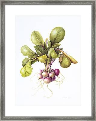 Miniature Turnips Framed Print by Margaret Ann Eden