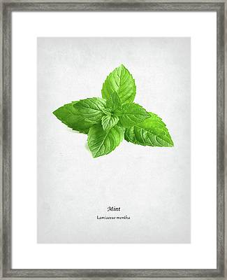 Mint Framed Print by Mark Rogan
