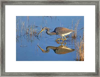 Mirror, Mirror  Framed Print by John Absher