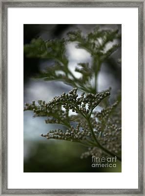 Mirrored Framed Print by Linda Shafer
