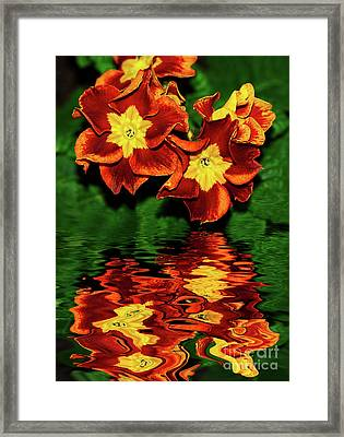 Mirrored Primula By Kaye Menner Framed Print by Kaye Menner