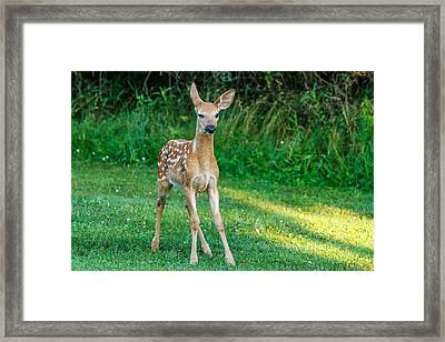 Mischievous Stop Framed Print by James Marvin Phelps
