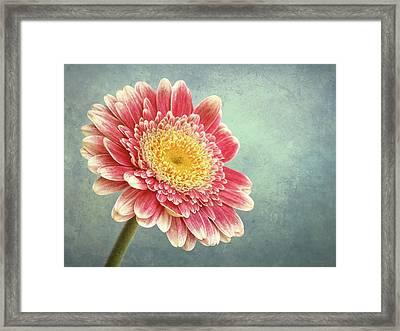 Miss Daisy Framed Print by Wim Lanclus