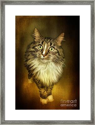 Miss Maple Framed Print by Lois Bryan