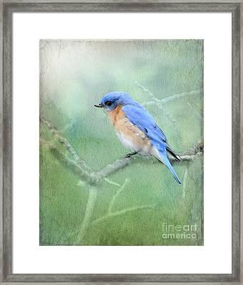 Misty Blue Framed Print by Betty LaRue