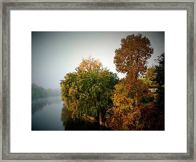 Misty Morning Shoreline Trees Framed Print by Rory Cubel