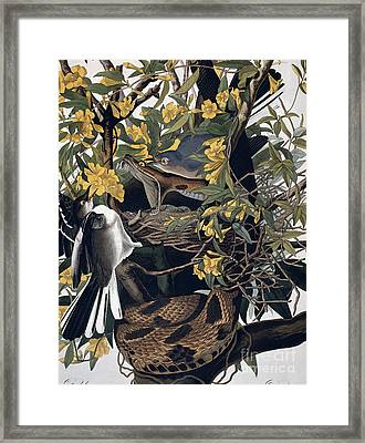Mocking Birds And Rattlesnake Framed Print by John James Audubon