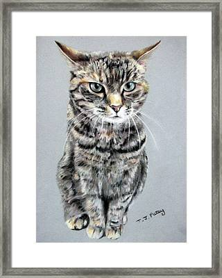 Molly 2 Framed Print by Tanya Patey