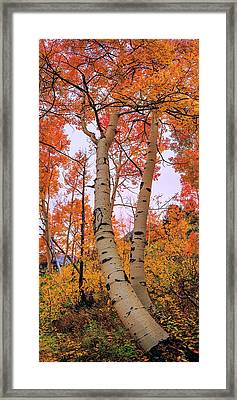 Moments Of Fall Framed Print by Chad Dutson