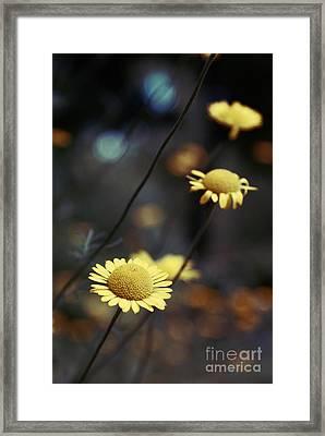 Momentum Framed Print by Aimelle