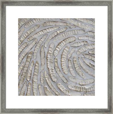 Momentum Framed Print by Susie Frazier