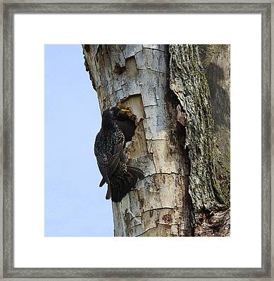 Mom's Here Framed Print by Betty-Anne McDonald