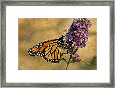 Monarch Butterfly Framed Print by Sandy Keeton