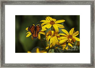 Monarch II Framed Print by James Taylor