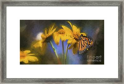 Monarch Framed Print by James Taylor