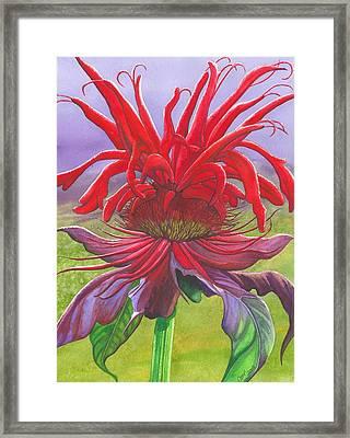 Monarda Framed Print by Catherine G McElroy