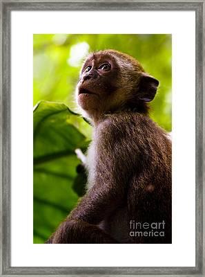 Monkey Awe Framed Print by Jorgo Photography - Wall Art Gallery