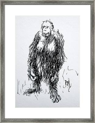 Monkey Business Framed Print by Pete Maier