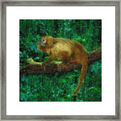 Monkey Of The Rainforest  Framed Print by Jack Zulli
