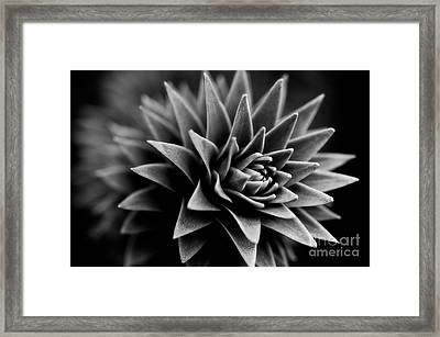 Monkey Puzzle Framed Print by Venetta Archer