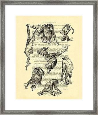 Monkeys Black And White Illustration Framed Print by Madame Memento