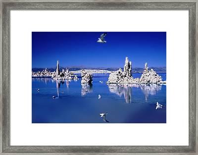 Mono Uno Framed Print by Paul Wear