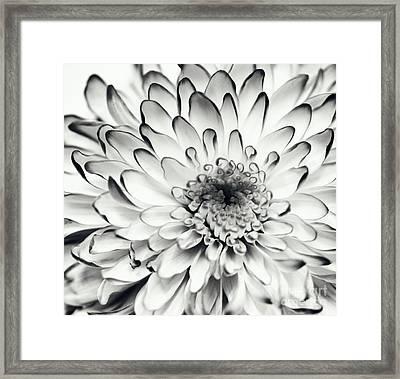 Monochrom Flower Ch Framed Print by SK Pfphotography