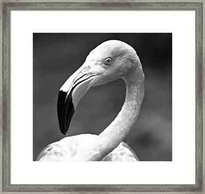 Monochrome Flamingo 2 Framed Print by Dan Sproul