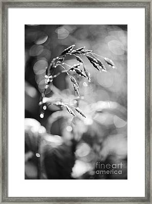 Monochrome Grass Abstract Framed Print by Arletta Cwalina