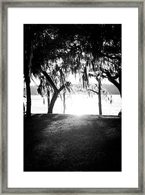 Monochrome Spanish Moss Framed Print by Shelby Young