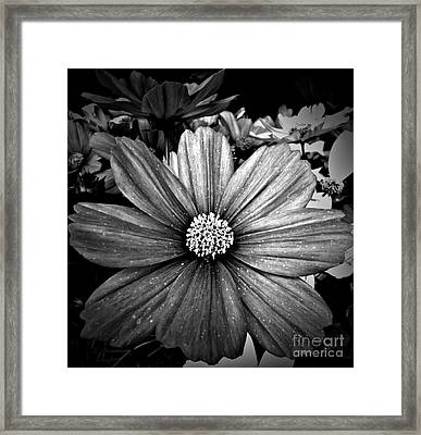 Monochrome Star Framed Print by Chalet Roome-Rigdon