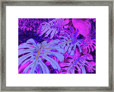 Monstera Leaves - In Violets Framed Print by Kerri Ligatich