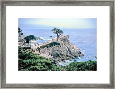 Monterey Cyprus  California Seacoast Seascape Picture Decor Framed Print by John Samsen
