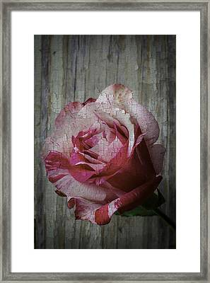 Moody Pink Red Rose Framed Print by Garry Gay