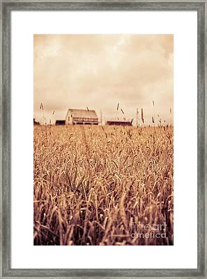 Moody Wheat Field Prince Edward Island Framed Print by Edward Fielding