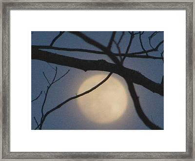 Moon Glow Framed Print by Lindie Racz