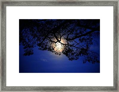 Moon Hiding In The Black Lace Of The Tree Framed Print by Lilia D