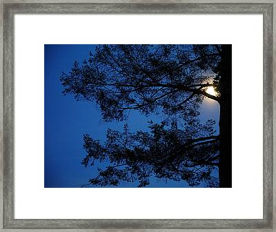 Moon Hiding In The Tree Framed Print by Lilia D