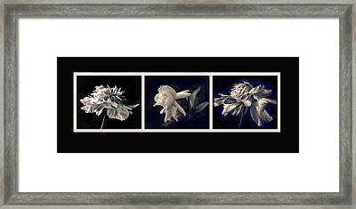 Moonglow Triptych Framed Print by Jessica Jenney