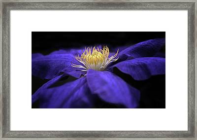 Moonlight Clematis Framed Print by Jessica Jenney